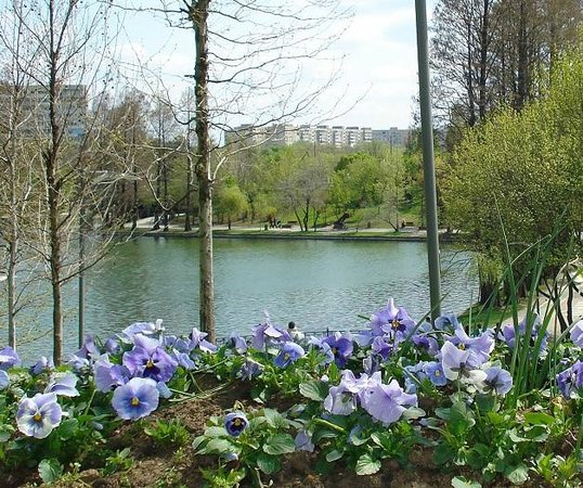 Parcul Alexandru Ioan Cuza: The part of the park with the fountain in the middle of the lake