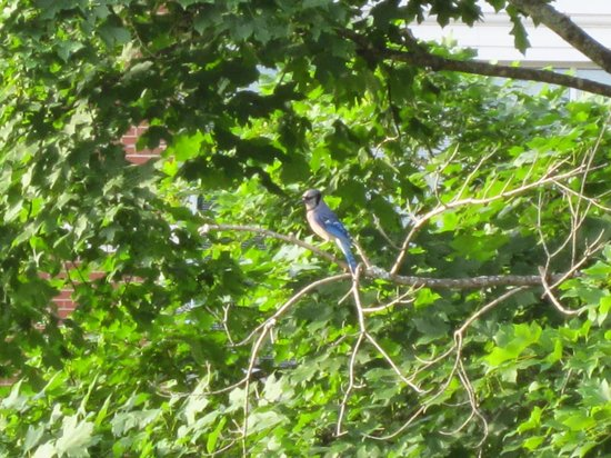 Captain Henderson House Bed and Breakfast: Blue Jay