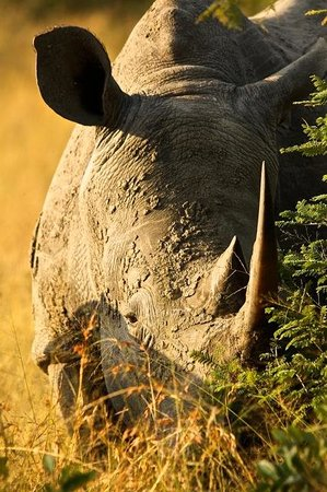 Waterbuck Game Lodge: Rare Rhino sighting