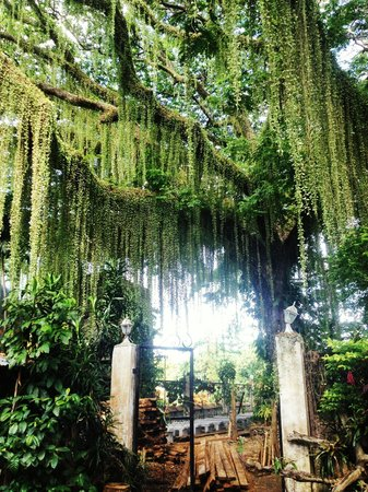 Brownman Outfitters Adventure Travel - Day Tours: At the yard of the Green Church in Camiguin