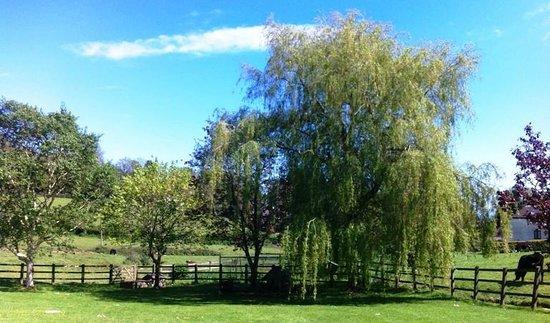 Bickwell Meadow B&B: Bickwell Meadow garden
