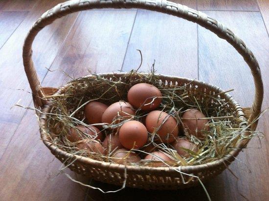 Bickwell Meadow B&B: Bickwell Meadow eggs