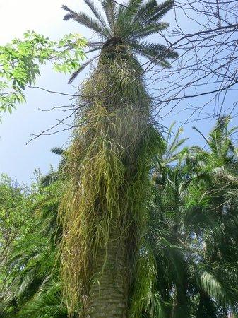Flower - Picture of Botanical Gardens (Jardin Botanico), Puerto de la Cruz - ...