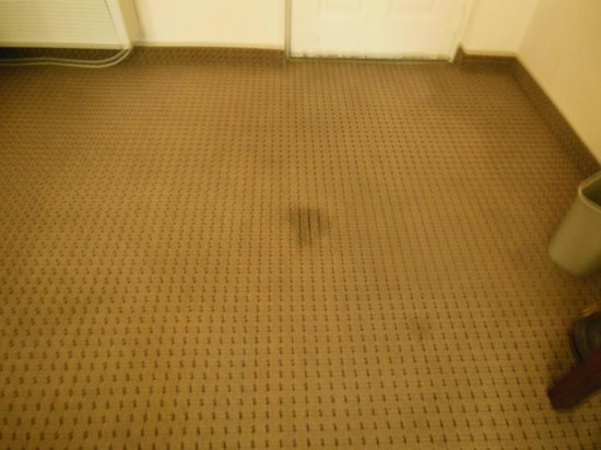Days Inn & Suites Orlando/UCF Area Research Park : Carpet stains
