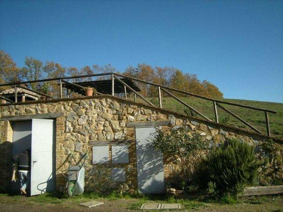 Agriturismo Fattoria Sant'Antonio: zona piscina