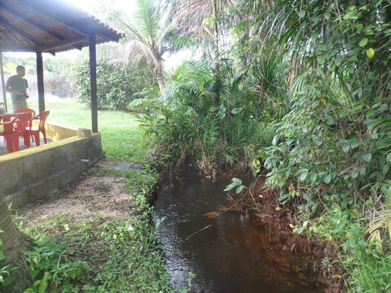 Pousada Manaus: Igarapé