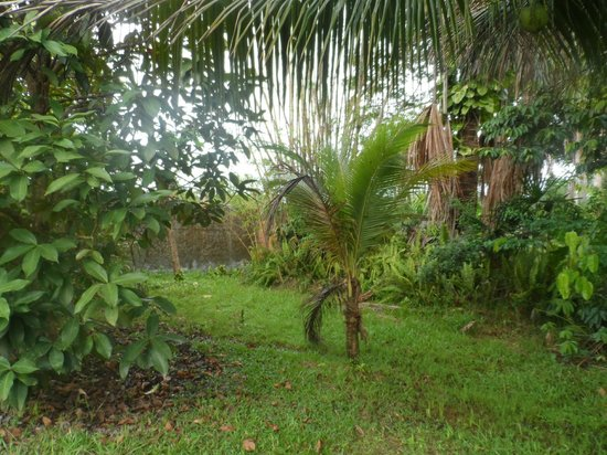 Pousada Manaus: Área verde