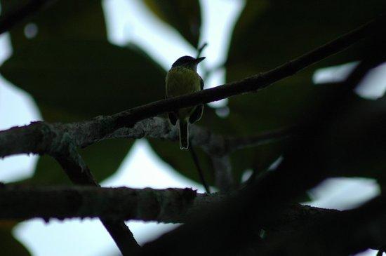 Pousada Manaus: Ferreirinho