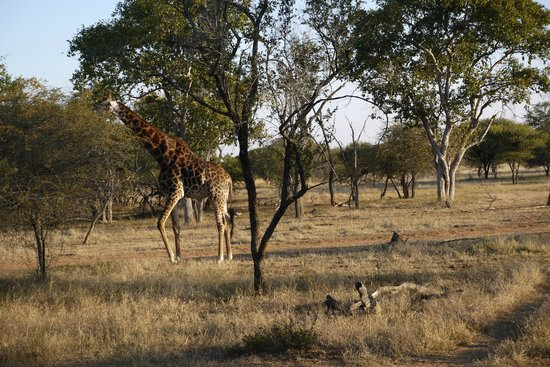 Zwahili Private Game Lodge & Spa: Safari ground
