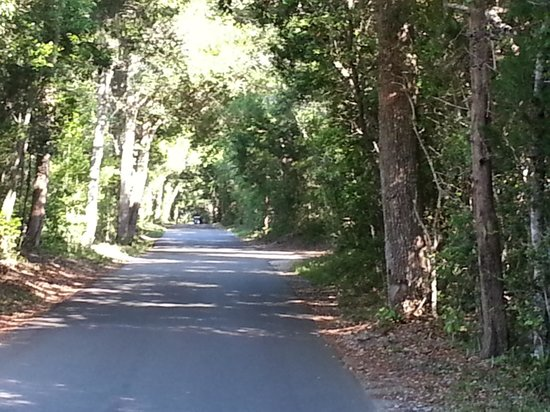 Bald Head Island Limited: Lovely tree-line roads