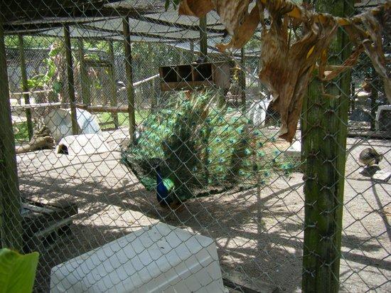 Octagon Wildlife Sanctuary And Rehabilitation Center: frontal display