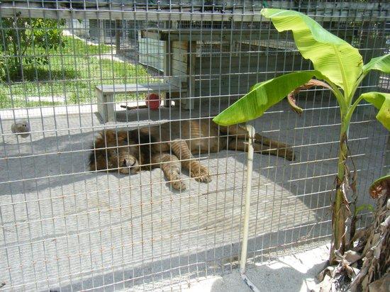 Octagon Wildlife Sanctuary And Rehabilitation Center: lazing in the sun