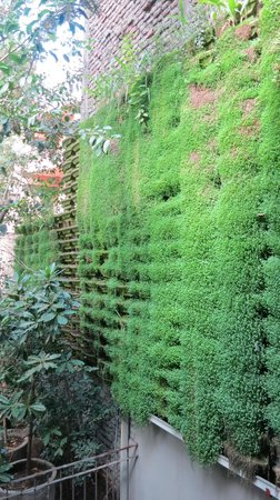 Lastarria Boutique Hotel: green wall near outdoor pool