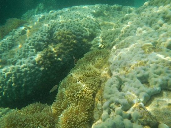 Nangyuan Island Dive Resort: Snorkelling