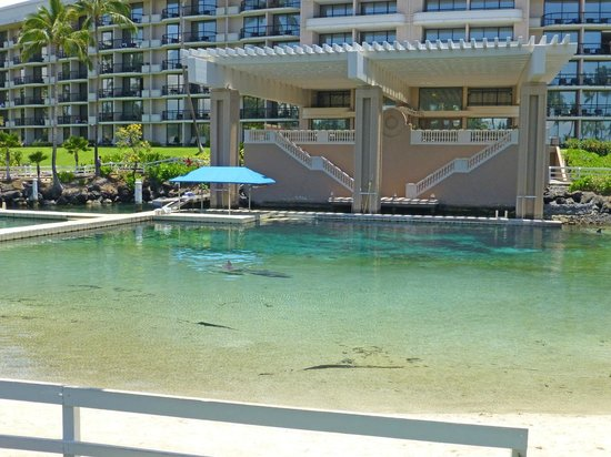 Kohala Suites by Hilton Grand Vacations: Dolphin Pool