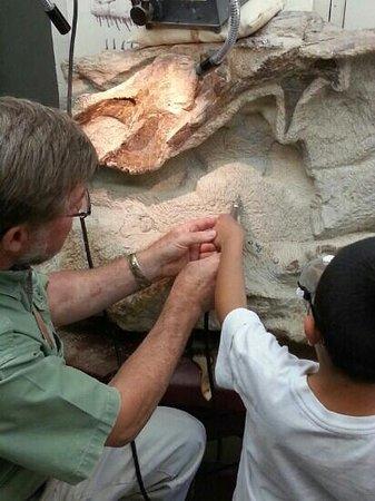 Morrison Natural History Museum: hands on paleontology