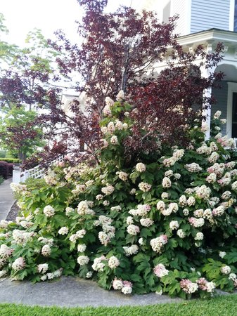 Americus Garden Inn Bed & Breakfast: beautiful gardens!