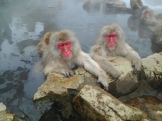 Jigokudani Snow Monkey Park: Quentinho no Inverno