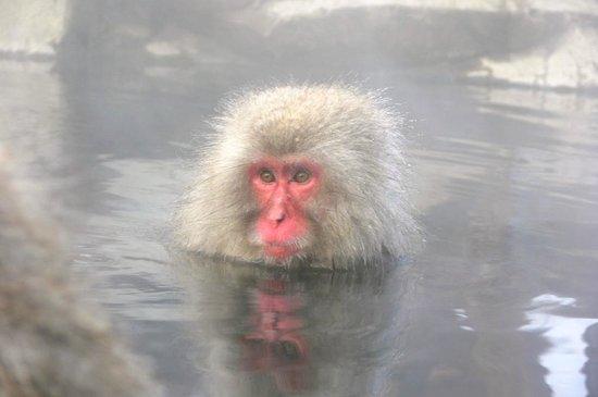 Jigokudani Snow Monkey Park: O meu reflexo