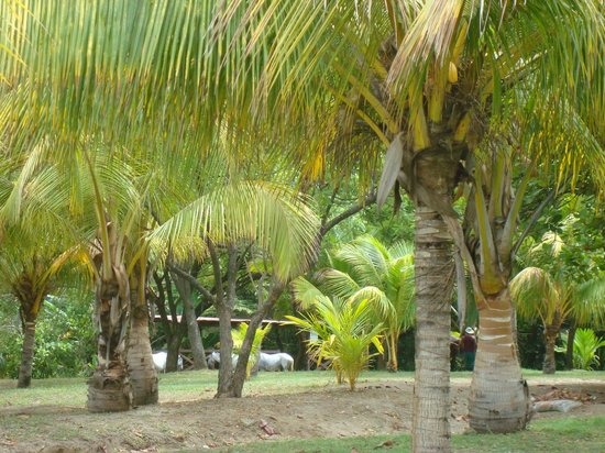 Barcelo Montelimar : Grounds