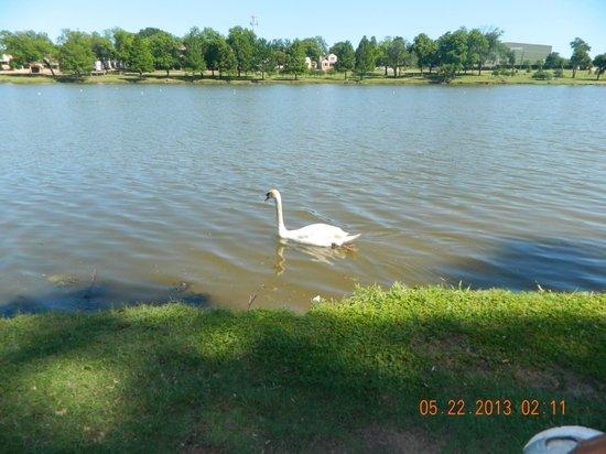 Bachman Lake Park goose
