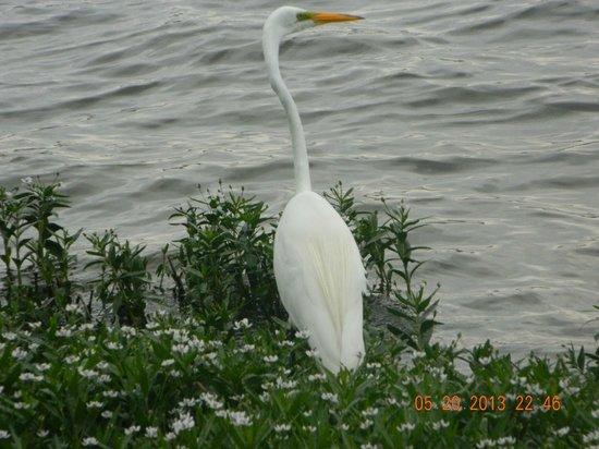 Bachman Lake Park: Close-up of goose at the lake
