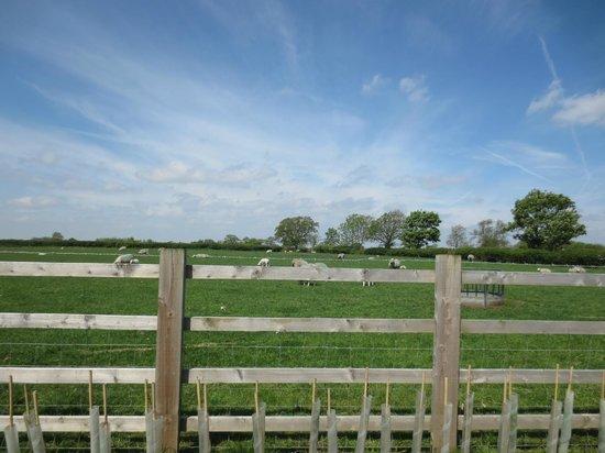 Jerico Farm : Grounds