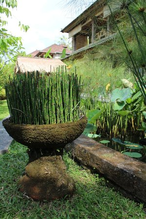 Sawah Sunrise Bed & Breakfast: Water plants and pond