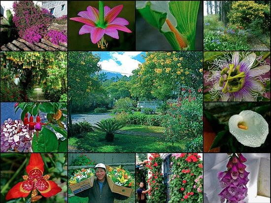 Hacienda Cusin: Cusin gardens