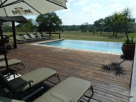 Nkorho Bush Lodge: Infinity pool