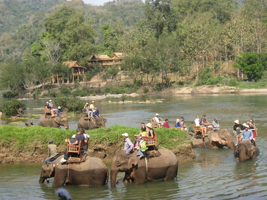 All Lao Elephant Camp - Day Tours: Elephant Riding - All lao Camp