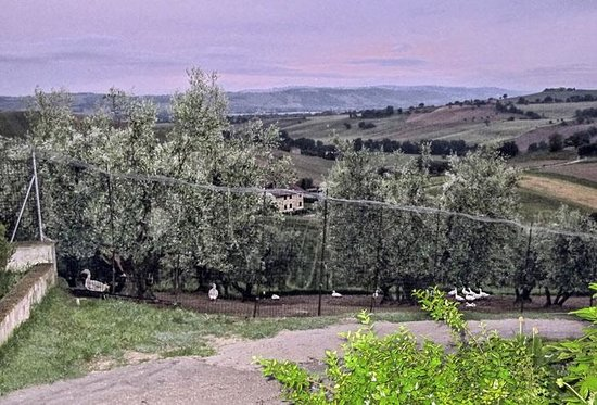 View down the hill from il giardino picture of il giardino dei sapori recanati tripadvisor - Giardino dei sapori calvenzano ...