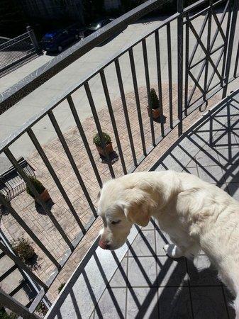 Albergo La Collina: der Hund auf dem Balkon