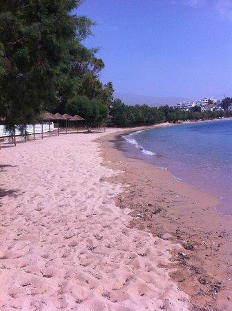 Coralli Camping: beach