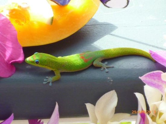 Orchid Tree Bed and Breakfast: Garden Visitor