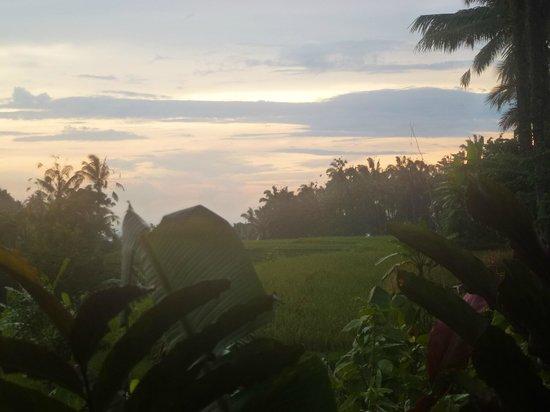 Bali Eco Stay Bungalows: So beautiful