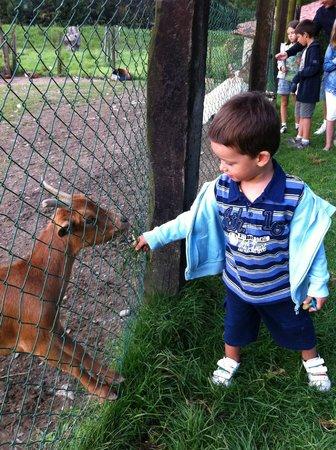 Casa Rural Jesuskoa: Con los animales (2011)