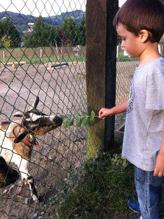 Casa Rural Jesuskoa: Con los animales (2012)