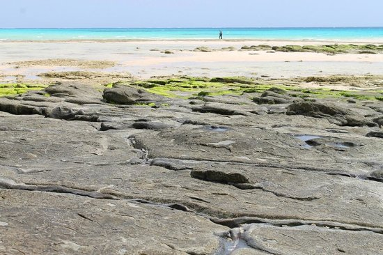 Ojima Coast : 畳石02