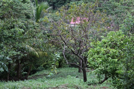 Serenity Lodges Dominica: Natur pur