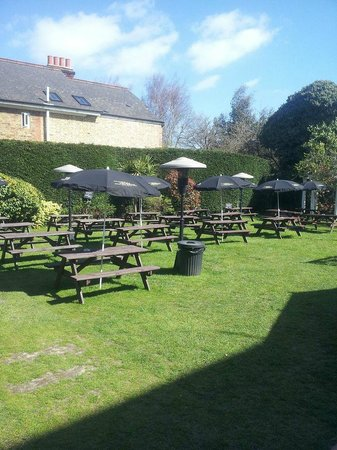 Norbiton and Dragon: Our lovely garden in the sun