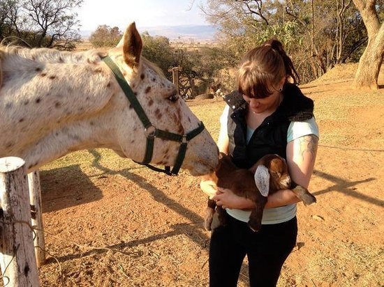 Lydenrust Guest Farm: Introducing a new member of the family