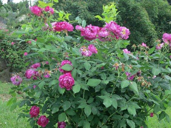 Roses foto di folon e il giardino delle rose firenze tripadvisor - Il giardino delle rose ...