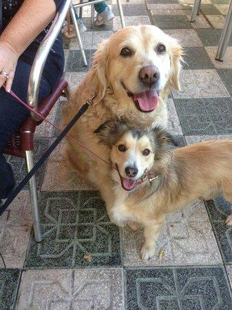 La China: Dog friendly....