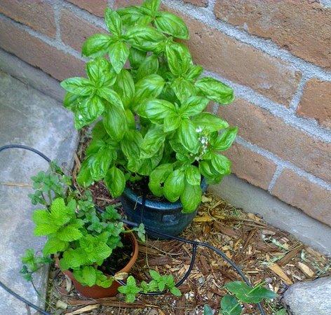 Riverside Suites: A herb garden!