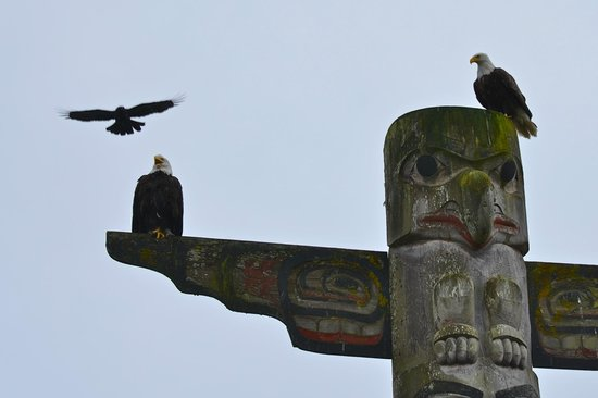 The Resort at Port Ludlow : Bald eagles getting dive bombed by a crazy suicidal bird