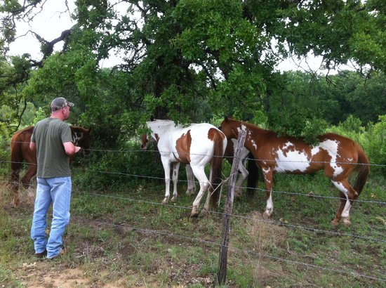 The Hideaway Ranch & Retreat: horsing around