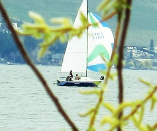 Casa Loma Lakeshore Resort: Sailing