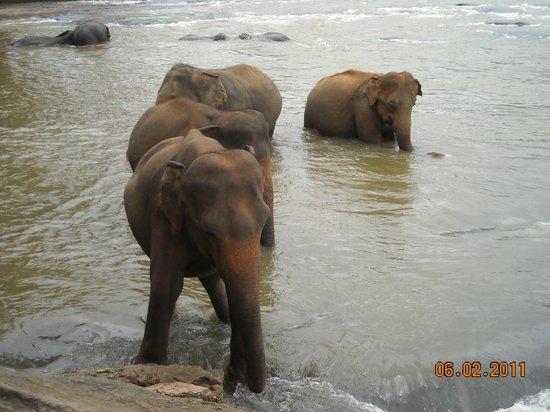 Pinnawala Elephant Orphanage: Pinnawela