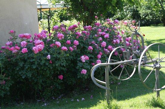 Hotel Fondo Catena: dettaglio giardino